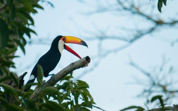 Iguazu_010