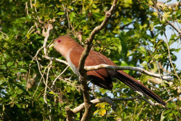 Iguazu_012