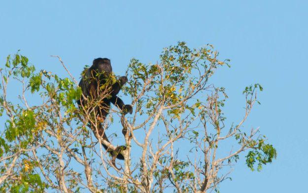 PantanalMonos-6363