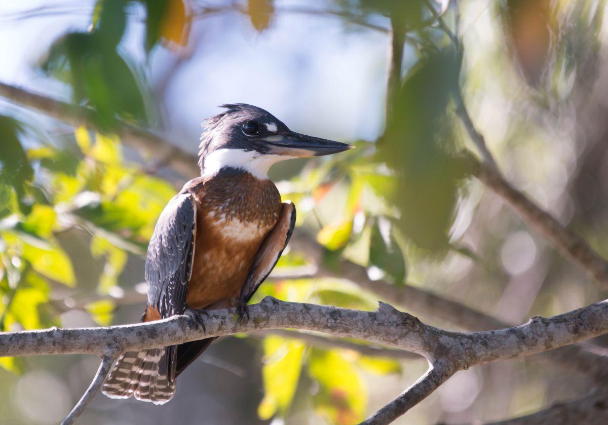 PantanalMPGrande-8223