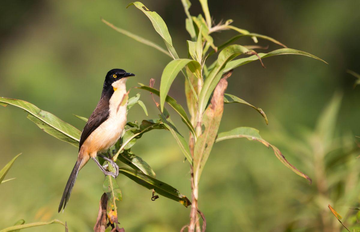 PantanalPiaf-8501